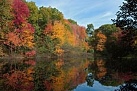 Link to Fall Foliage gallery